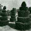 Samuael Topiary