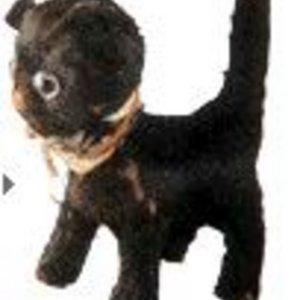 Profile picture for Rein