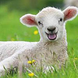 sheepish edits on vimeo