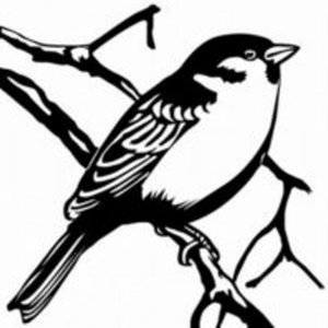 Profile picture for Sparrow Songs