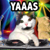 feline groovey