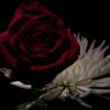 Lotus & Rose