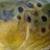 wyoflyfish