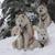 Base Camp Bigfork Dogsled Lodge