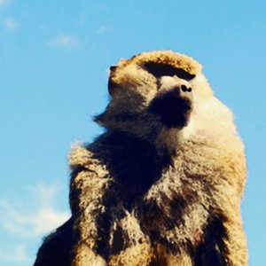 Profile picture for CGMonkeyKing