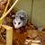 Liz Possum