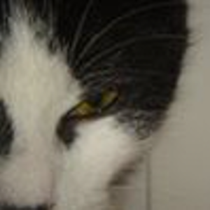 Profile picture for wiko17