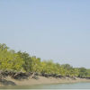 Sundarban Wild
