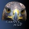 Carnyx Wild