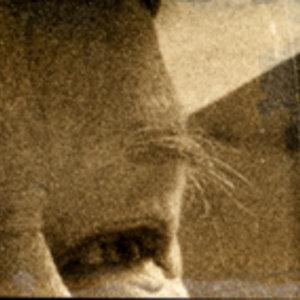 Profile picture for René Frölke