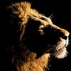 Lion's Mane - Bible Verses
