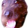 Harald Hund