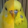 Dancing_Bird07