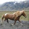 Finnur Bárðarson