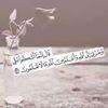 Moustafa El Sherbiny III