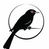 Redbird Music