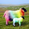 Neon Sheep Studios