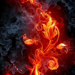 Fire Flower Tattoo On Vimeo