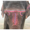 elephantinspace