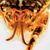 Sea Lice Vision