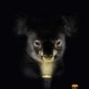 koalalek