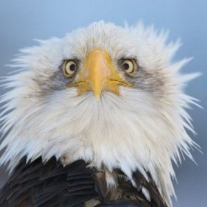 Profile picture for American Wizards