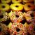 donut magazine