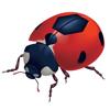 Socketbug Dev