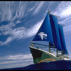 Profile picture for Greenpeace España