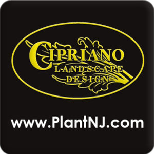 Profile picture for NJ Landscaping
