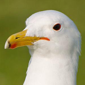 Profile picture for Zachery Jensen