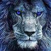 Lion Freezy