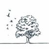 Tree Top Films