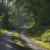 Living Forest Communities