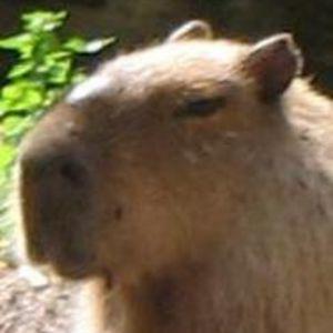 Profile picture for Dragos Manescu