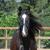 My Horse Style