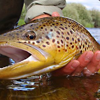 Fins Fly Fishing