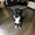 TiTou Dog Prod