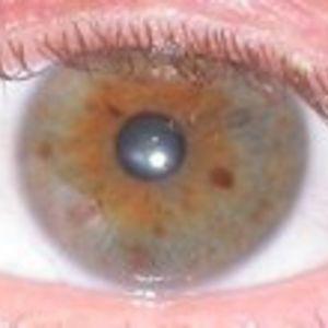 Profile picture for looxix