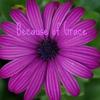 becauseofgrace