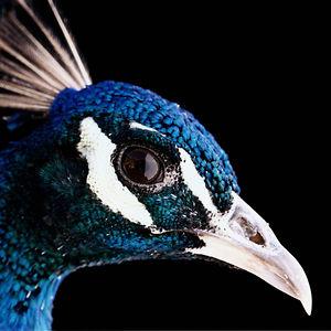 Profile picture for Nolan Peacock