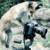 Roche Films