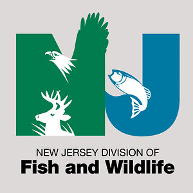 Image gallery nj wildlife and game for Wildlife fish and game