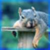 Squirrel montage