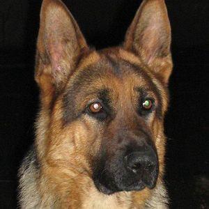 Profile picture for alejo crusty