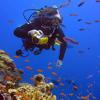 Cairns Dive Adventures