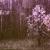 kasprsg