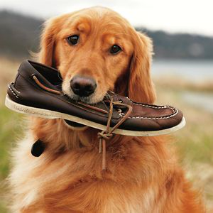 Profile picture for Sperry Top-Sider