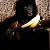 Gorillacoustic.com