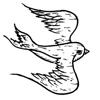 southernswallows